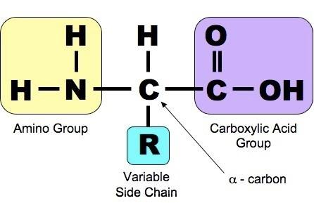 Органическая химия в медицинском вузе