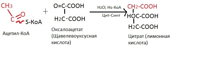 Цикл Кребса схема