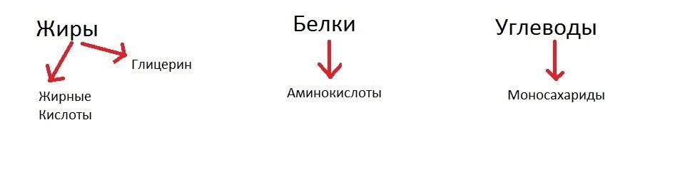 Цикл Кребса простым языком