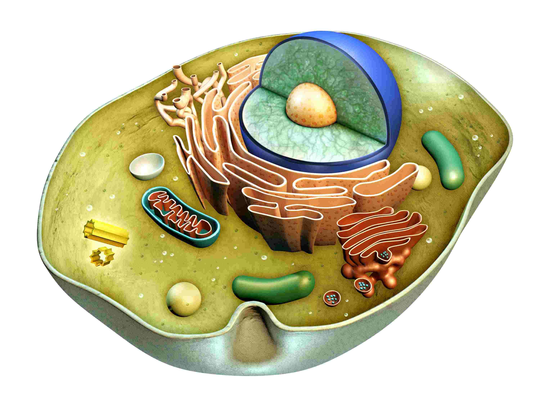 Первый курс медицинского университета: биология