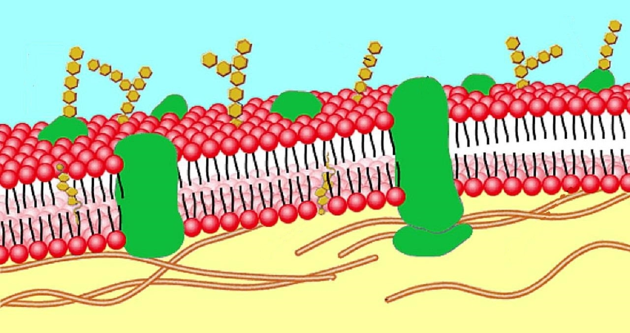 Каналы мембраны клетки патфиз