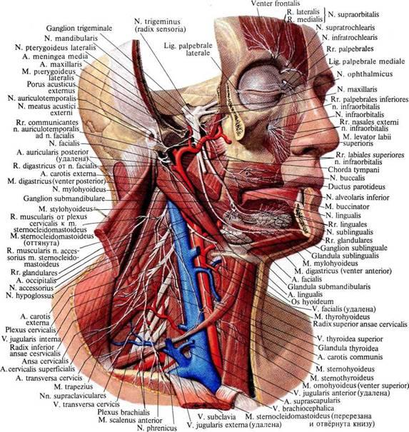 Оперативные доступы в общей хирургии