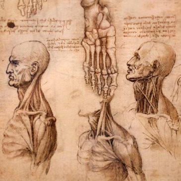 Введение в анатомию