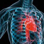 Топографическая анатомия груди