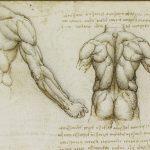 Анатомия мышц спины. Глубокий слой