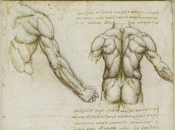 Подвздошно-реберная мышца поясницы