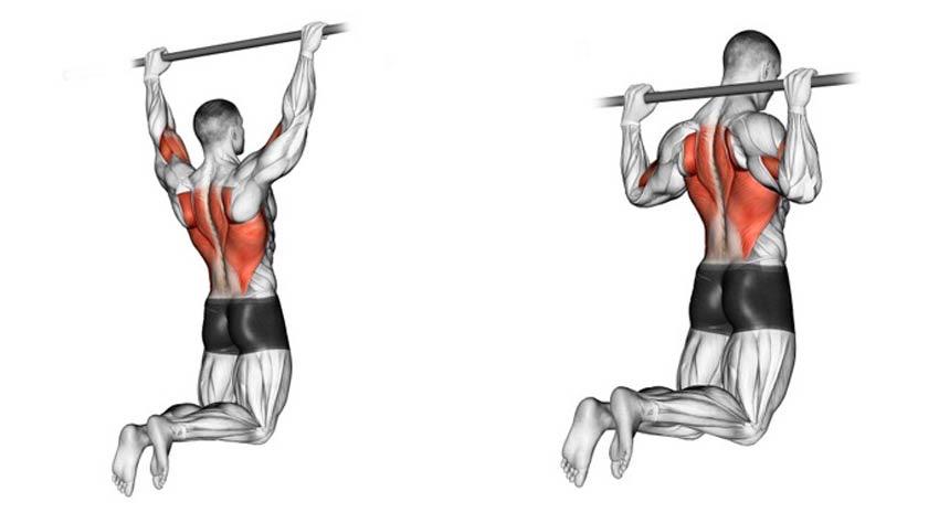 поверхностные мышцы спины анатомия
