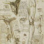 Анатомия мышц бедра. Часть 1