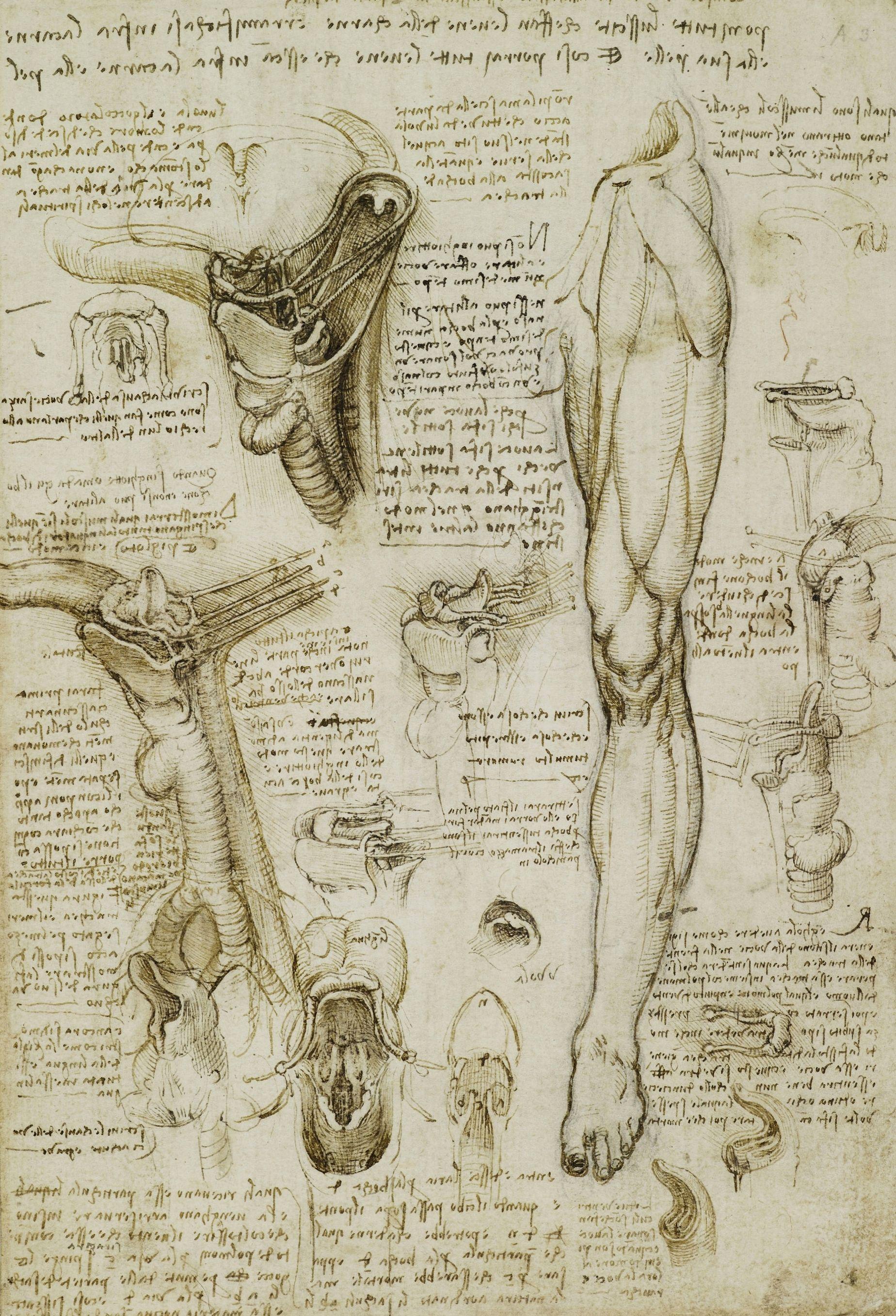 kak_vyuchit_anatomiu_myshc_bedra