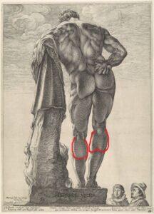 anatomia_myshc_goleni2