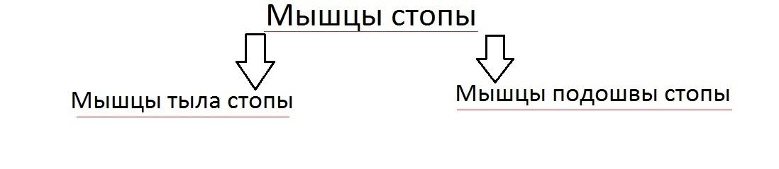 klassificatia_myshc_stopy1