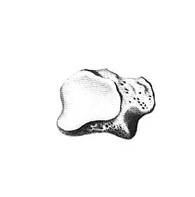 zadnyaya_poverhnost_cubovidnoj_kosti_anatomia