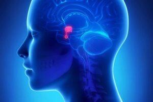fiziologia_centralnoj_endokrinnoj_sistemy