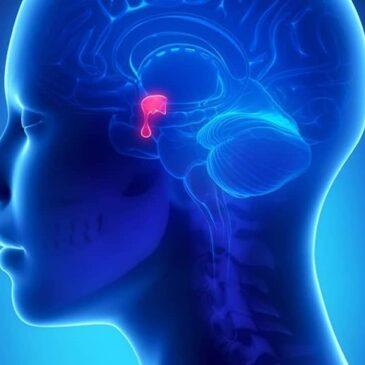 Физиология центральной эндокринной системы, часть 2