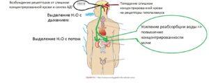 fiziologia_gipotalamusa