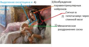 oksitocyn_effecty 1