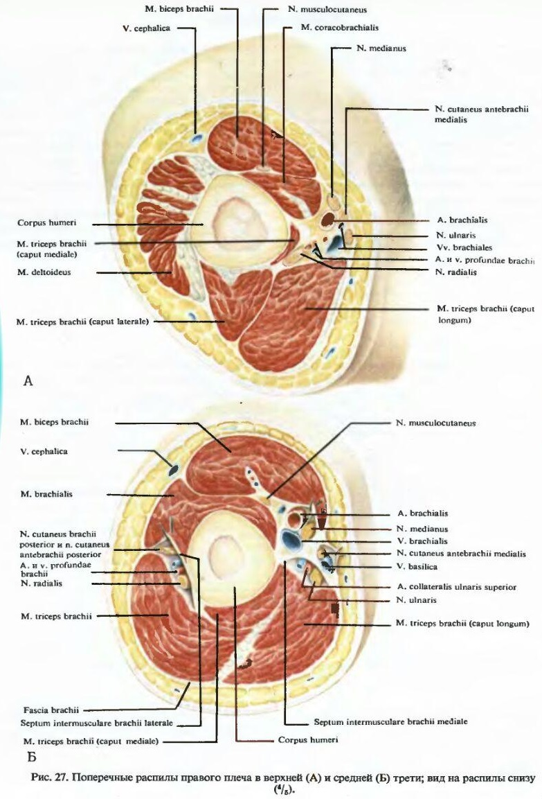 topographia_myshc_plecha