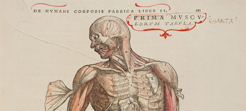 anatomia_glubokih_myshc_shei
