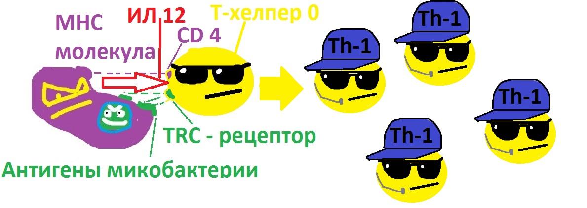 differencirova_t-helperov