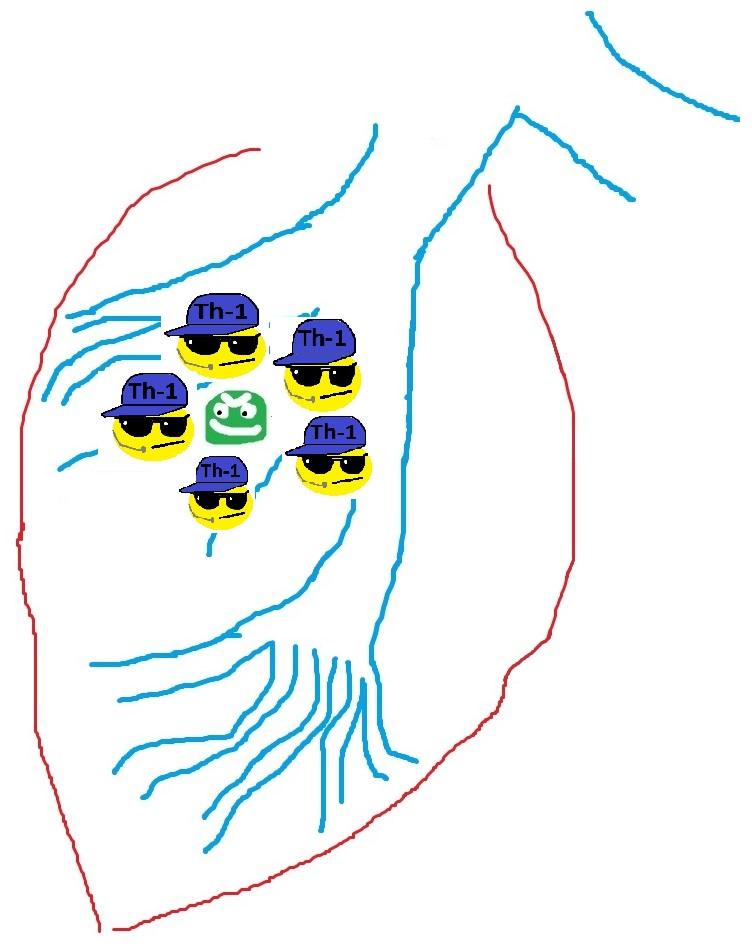 tuberkuloz_immunologia
