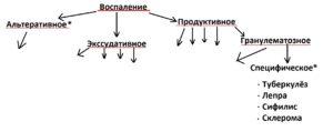 vospalenie_v_patologoanatomii