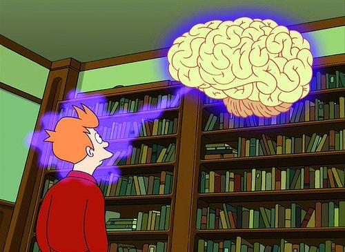 anatomia_konechnogo_mozga