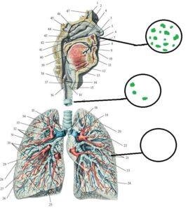 mikrobiologia_v_mede
