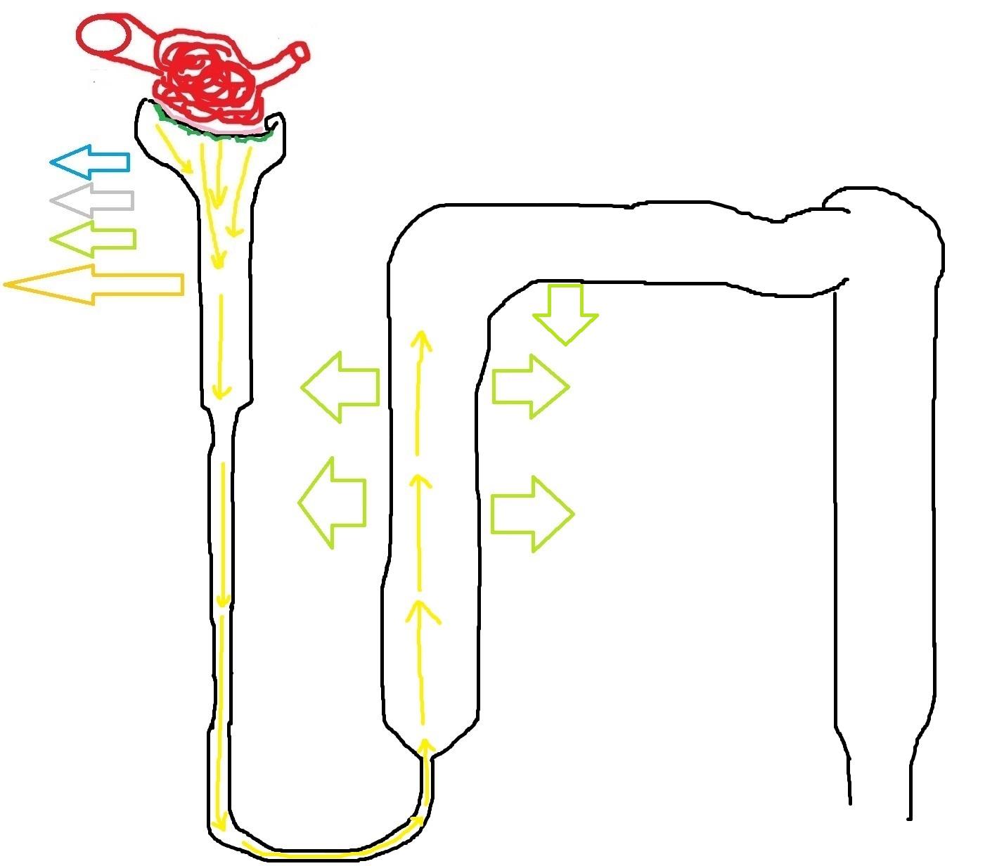 conzentrazia_mochi_fiziologia