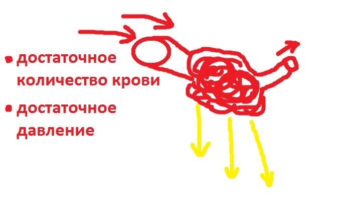 pochechnyj_krovotok